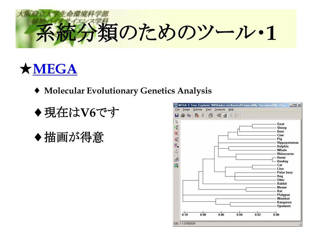 系統分類のためのツール・1 MEGA 現在はV6です 描画が得意