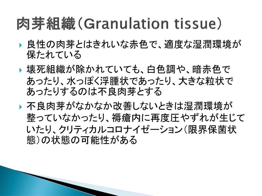 肉芽組織(Granulation tissue)