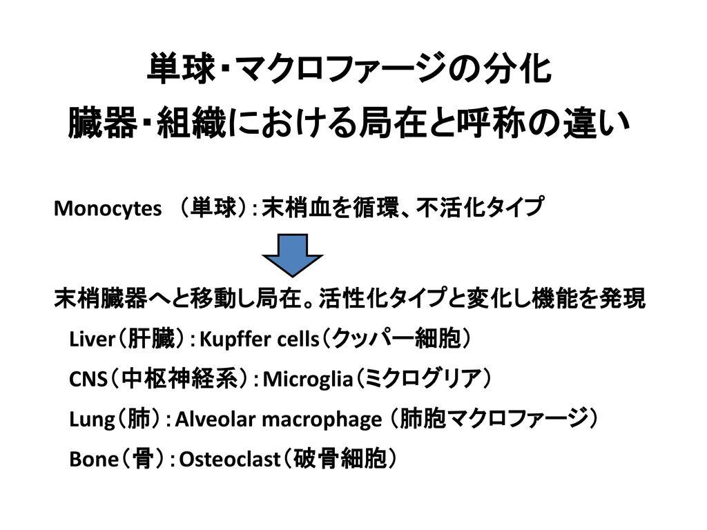 単球・マクロファージの分化 臓器・組織における局在と呼称の違い