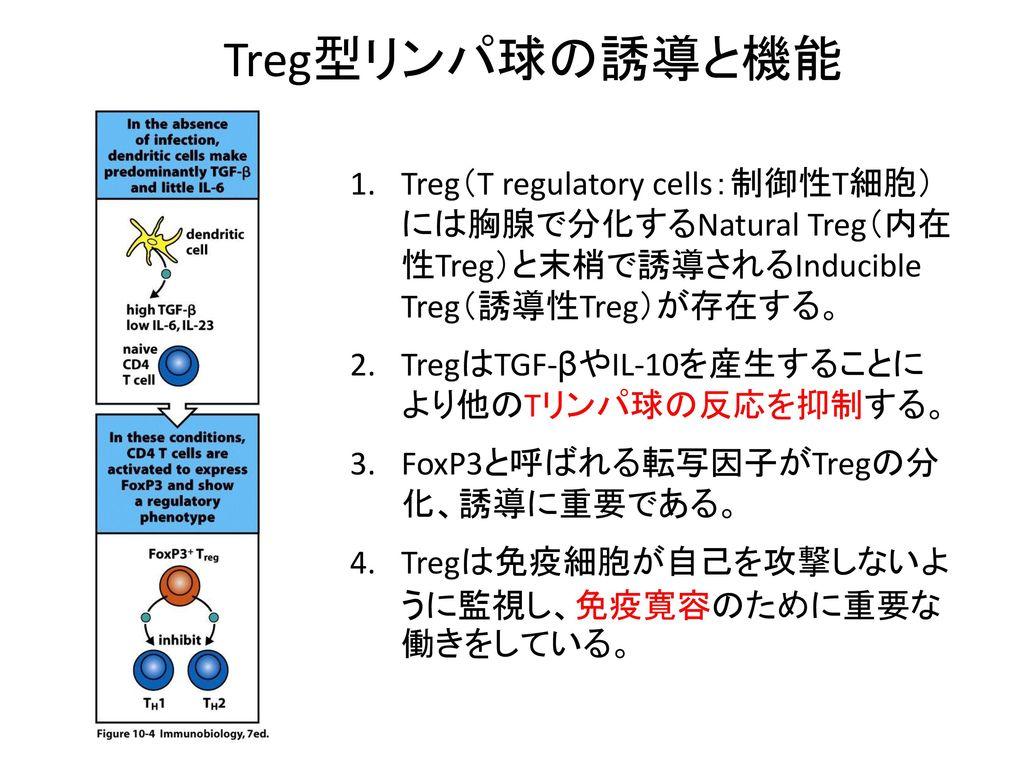Treg型リンパ球の誘導と機能 Treg(T regulatory cells:制御性T細胞) には胸腺で分化するNatural Treg(内在 性Treg)と末梢で誘導されるInducible Treg(誘導性Treg)が存在する。