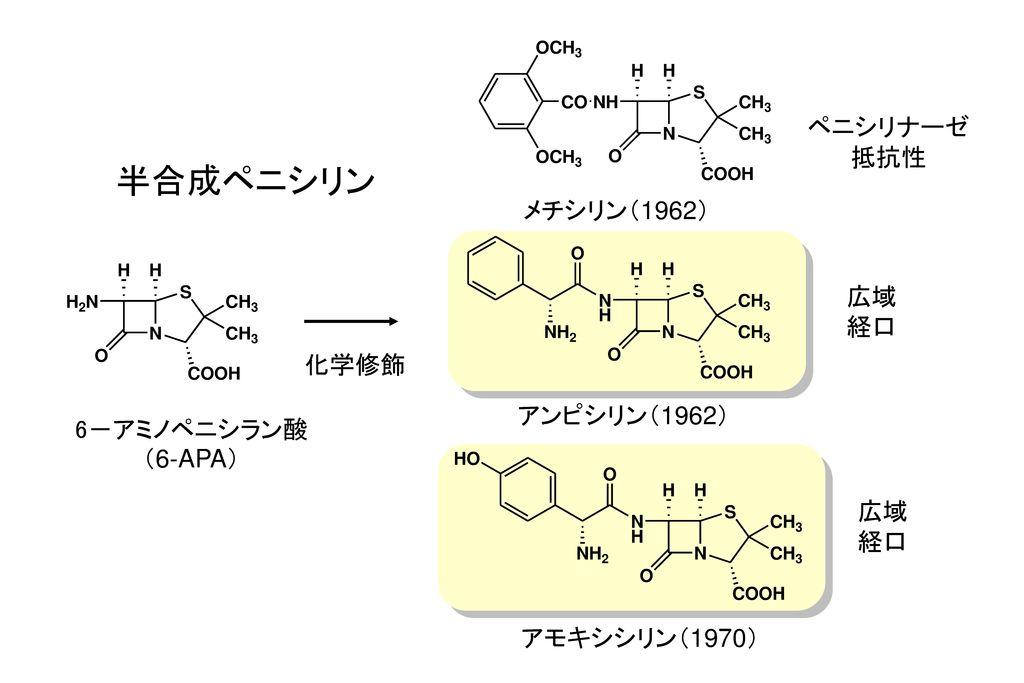 半合成ペニシリン ペニシリナーゼ 抵抗性 メチシリン(1962) 広域 経口 化学修飾 アンピシリン(1962) 6-アミノペニシラン酸