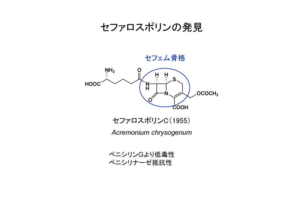 Acremonium chrysogenum