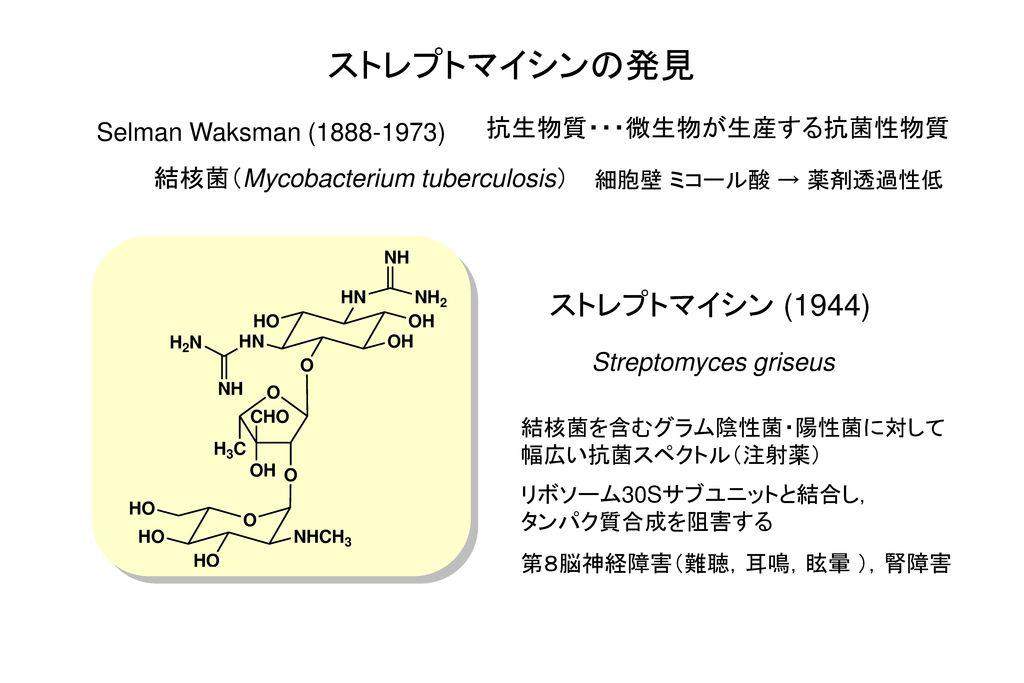 ストレプトマイシンの発見 ストレプトマイシン (1944) 抗生物質・・・微生物が生産する抗菌性物質