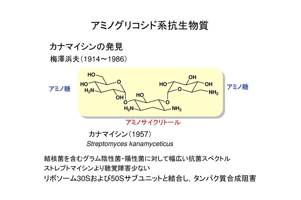 アミノグリコシド系抗生物質 カナマイシンの発見 梅澤浜夫(1914~1986) カナマイシン(1957)