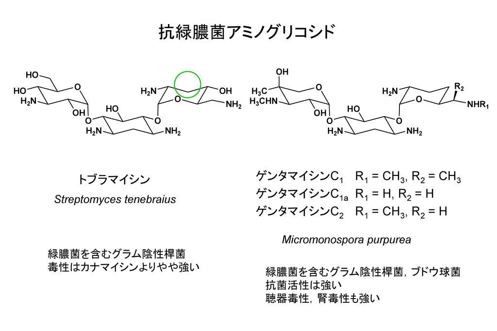 Streptomyces tenebraius