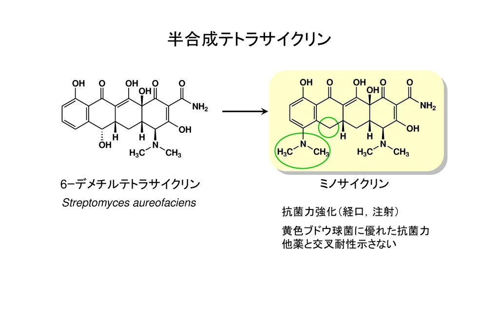 半合成テトラサイクリン 6ーデメチルテトラサイクリン ミノサイクリン Streptomyces aureofaciens