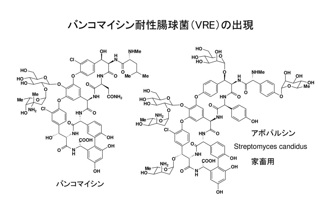 バンコマイシン耐性腸球菌(VRE)の出現