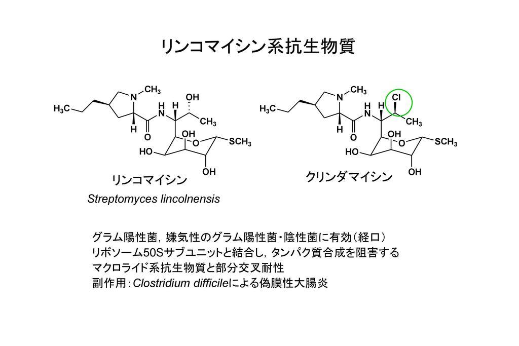 リンコマイシン系抗生物質 クリンダマイシン リンコマイシン Streptomyces lincolnensis