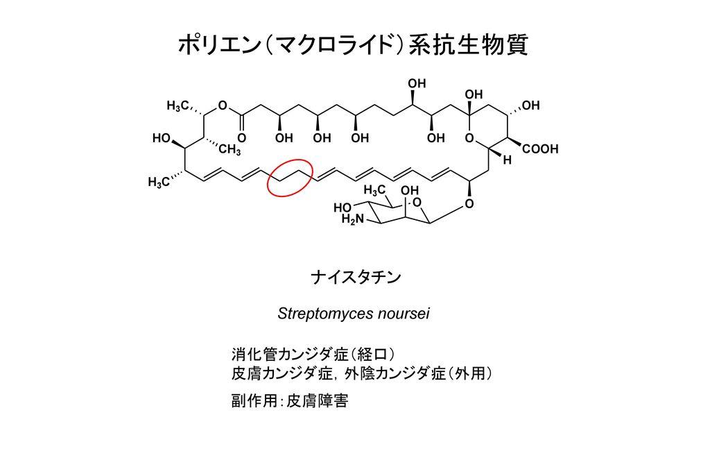 ポリエン(マクロライド)系抗生物質 ナイスタチン Streptomyces noursei 消化管カンジダ症(経口)
