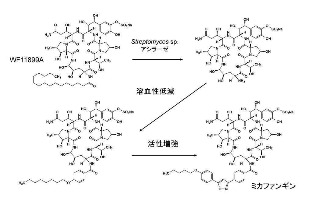 Streptomyces sp. アシラーゼ WF11899A 溶血性低減 活性増強 ミカファンギン