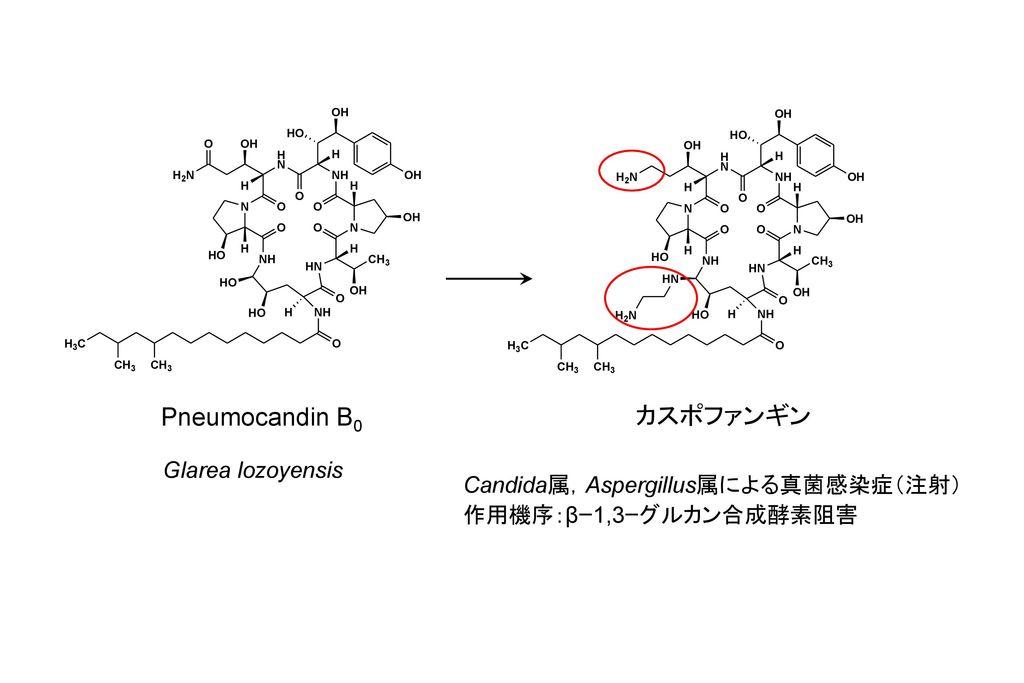 Pneumocandin B0 カスポファンギン Glarea lozoyensis