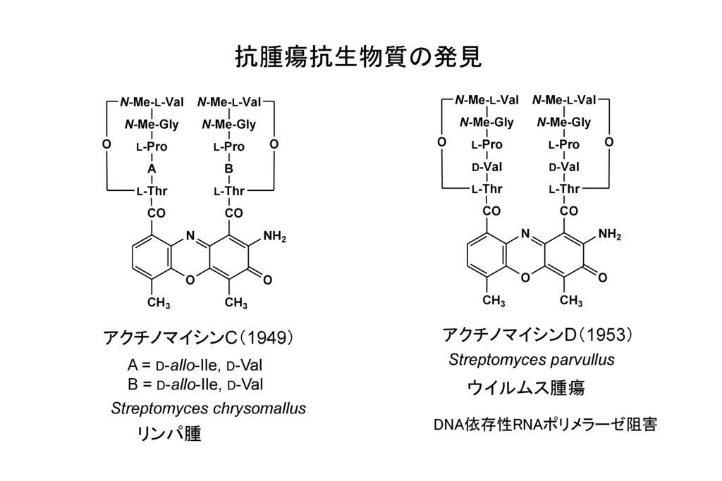 抗腫瘍抗生物質の発見 アクチノマイシンD(1953) アクチノマイシンC(1949) ウイルムス腫瘍 リンパ腫