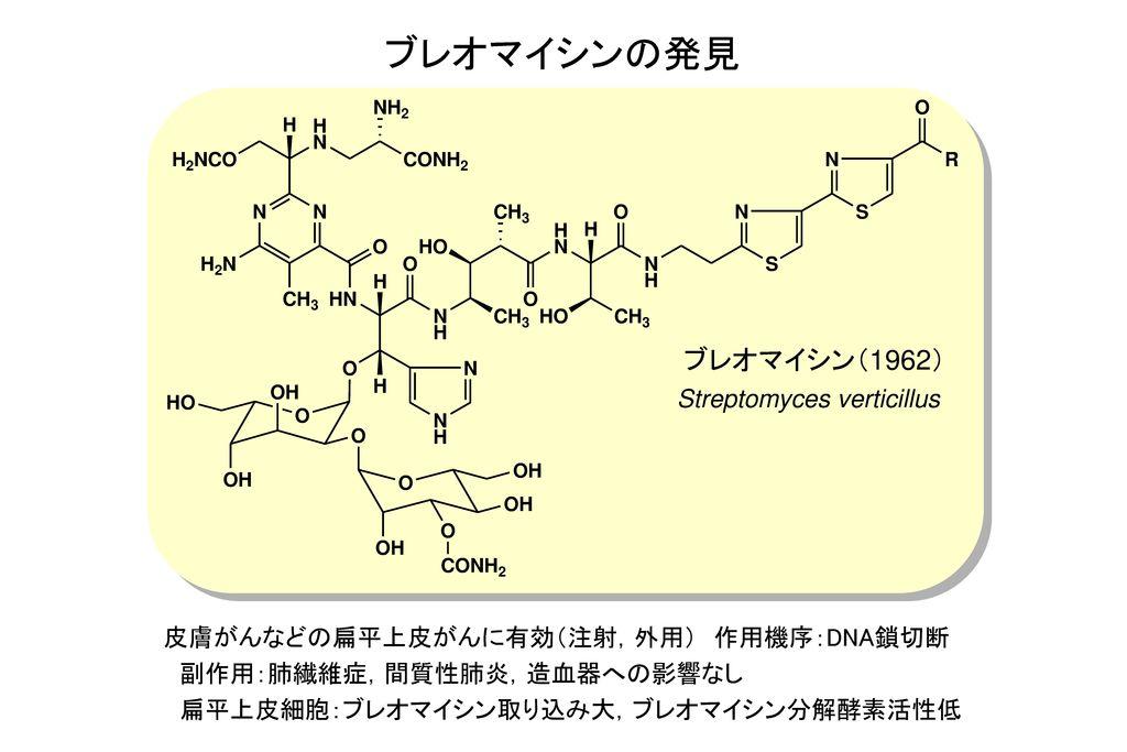 ブレオマイシンの発見 ブレオマイシン(1962) Streptomyces verticillus