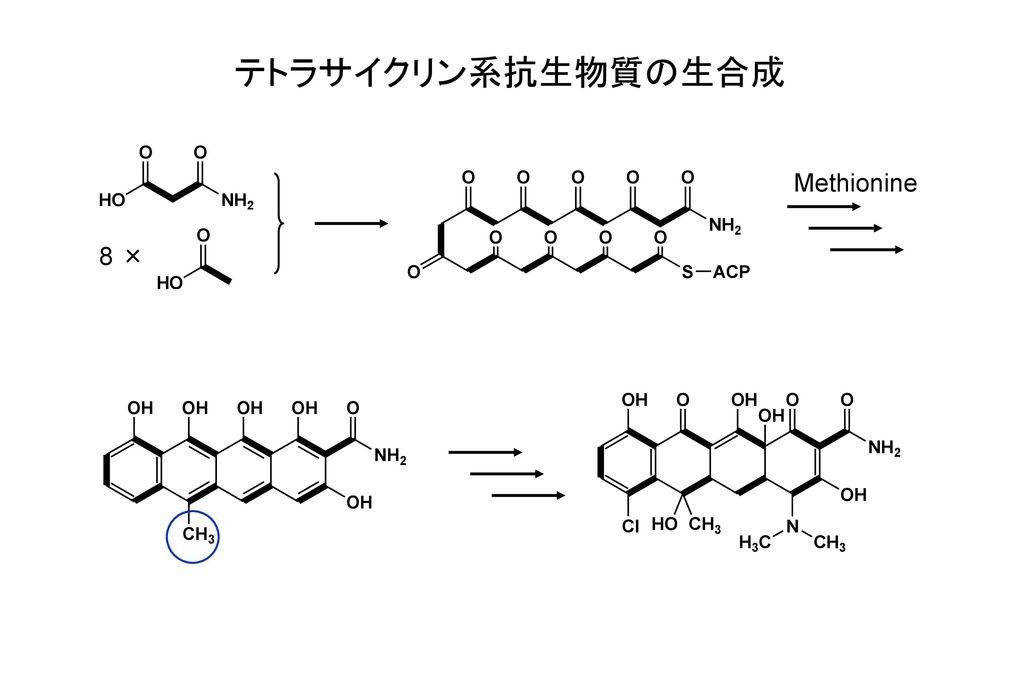 テトラサイクリン系抗生物質の生合成 Methionine 8 ×