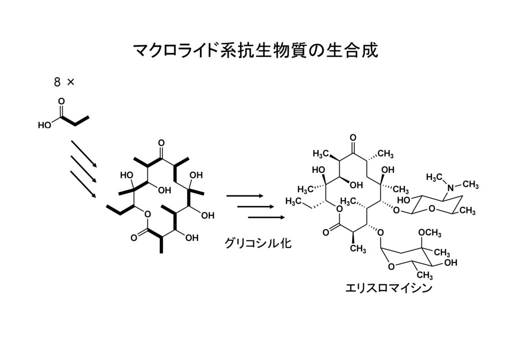 マクロライド系抗生物質の生合成 8 × グリコシル化 エリスロマイシン
