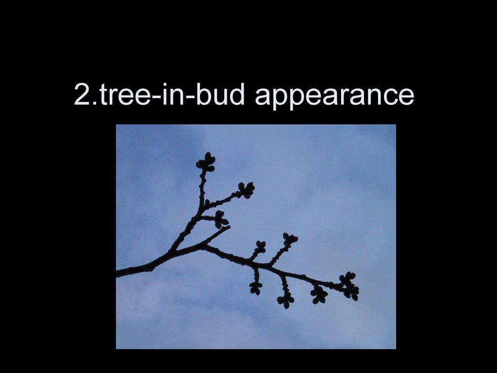 2.tree-in-bud appearance