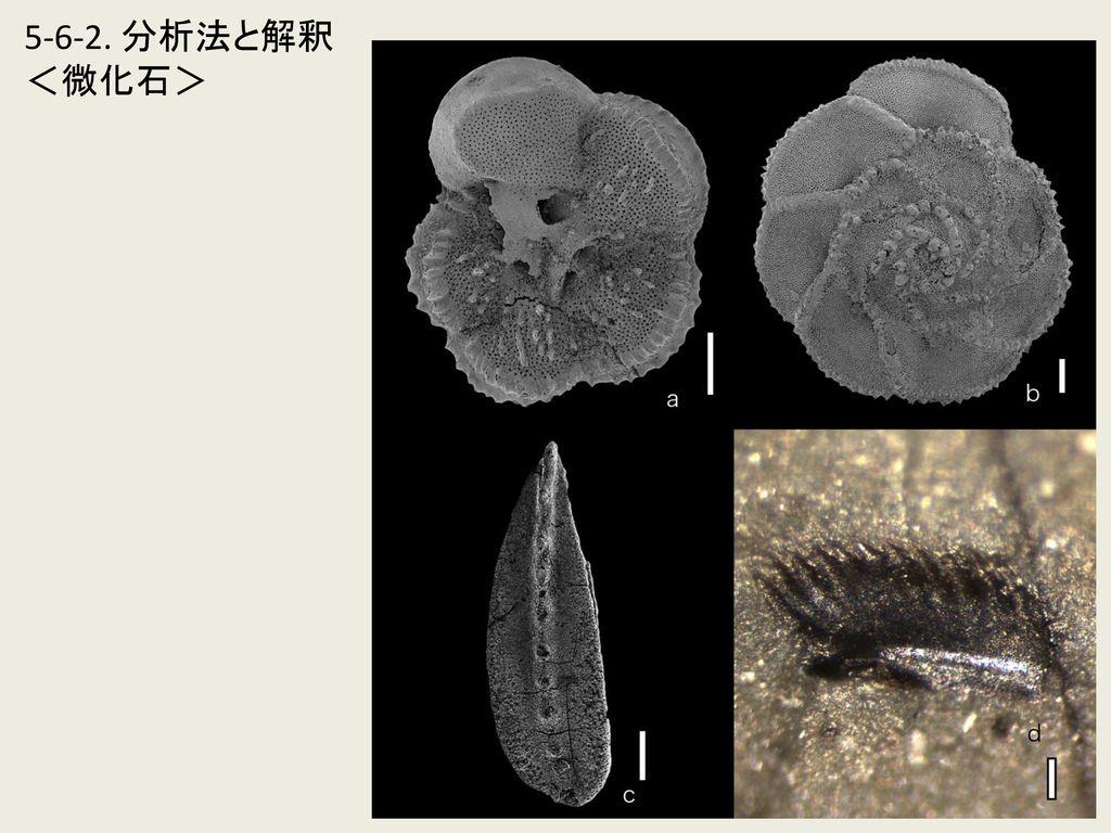 5-6-2. 分析法と解釈 <微化石>