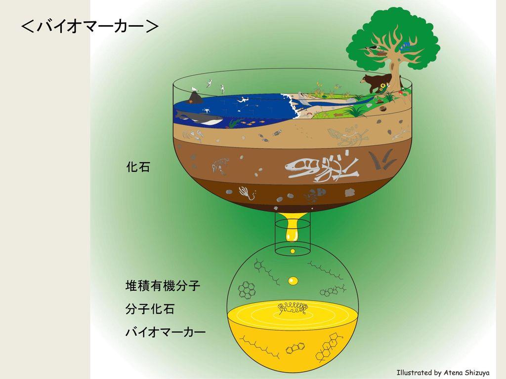 <バイオマーカー> 化石 堆積有機分子 分子化石 バイオマーカー