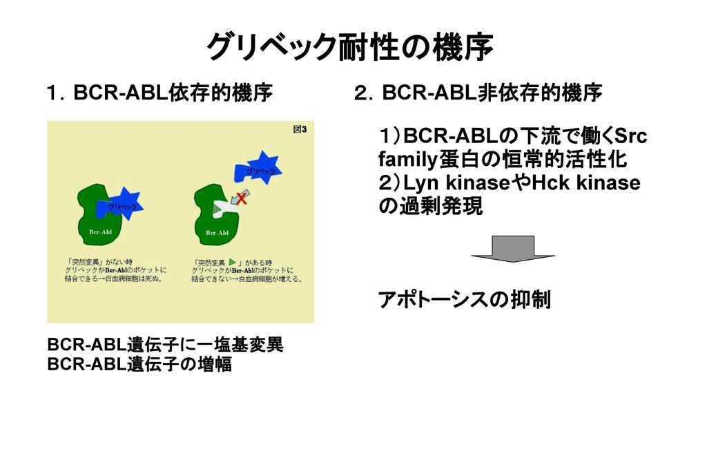 グリベック耐性の機序 1.BCR-ABL依存的機序 2.BCR-ABL非依存的機序