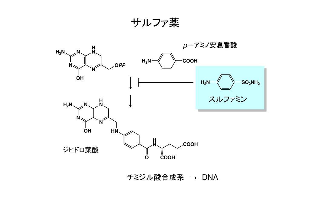 サルファ薬 p-アミノ安息香酸 スルファミン ジヒドロ葉酸 チミジル酸合成系 → DNA