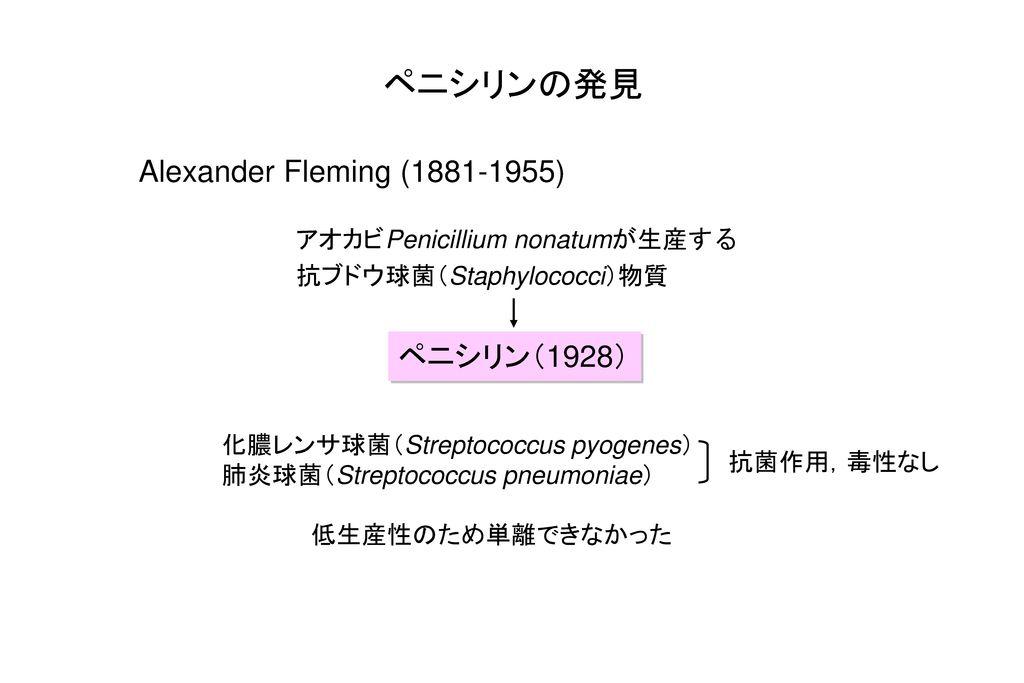 ペニシリンの発見 Alexander Fleming (1881-1955) ペニシリン(1928)