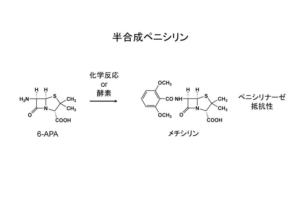 半合成ペニシリン 化学反応 or 酵素 ペニシリナーゼ 抵抗性 6-APA メチシリン