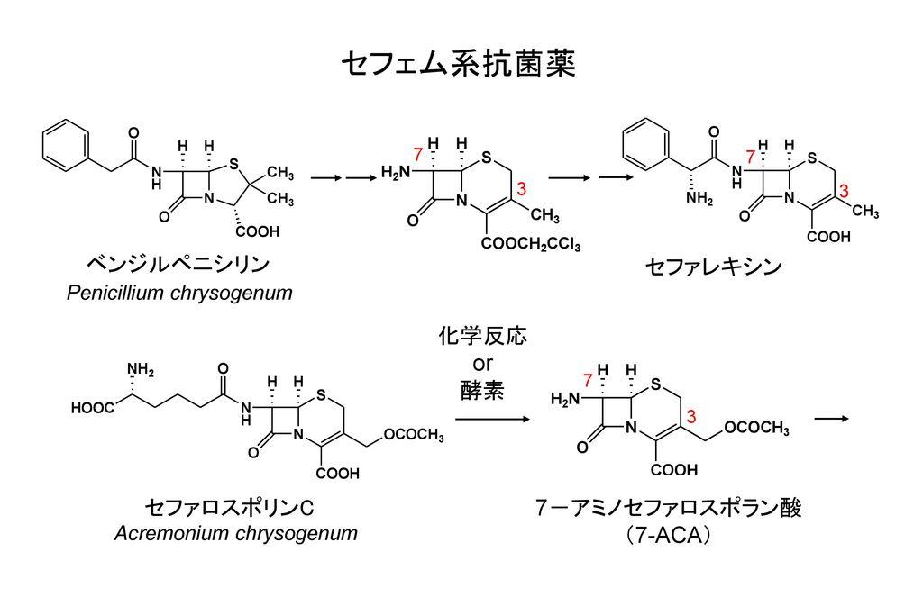 セフェム系抗菌薬 ベンジルペニシリン セファレキシン 化学反応 or 酵素 セファロスポリンC 7-アミノセファロスポラン酸 (7-ACA)