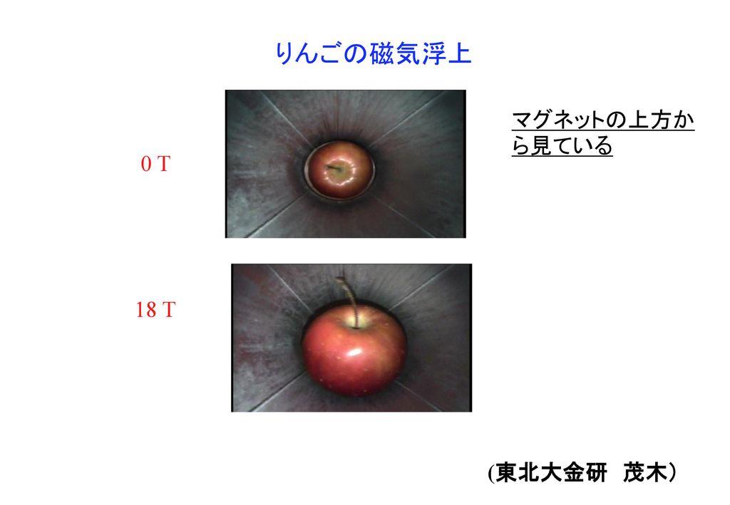 りんごの磁気浮上 マグネットの上方から見ている 0 T 18 T (東北大金研 茂木)