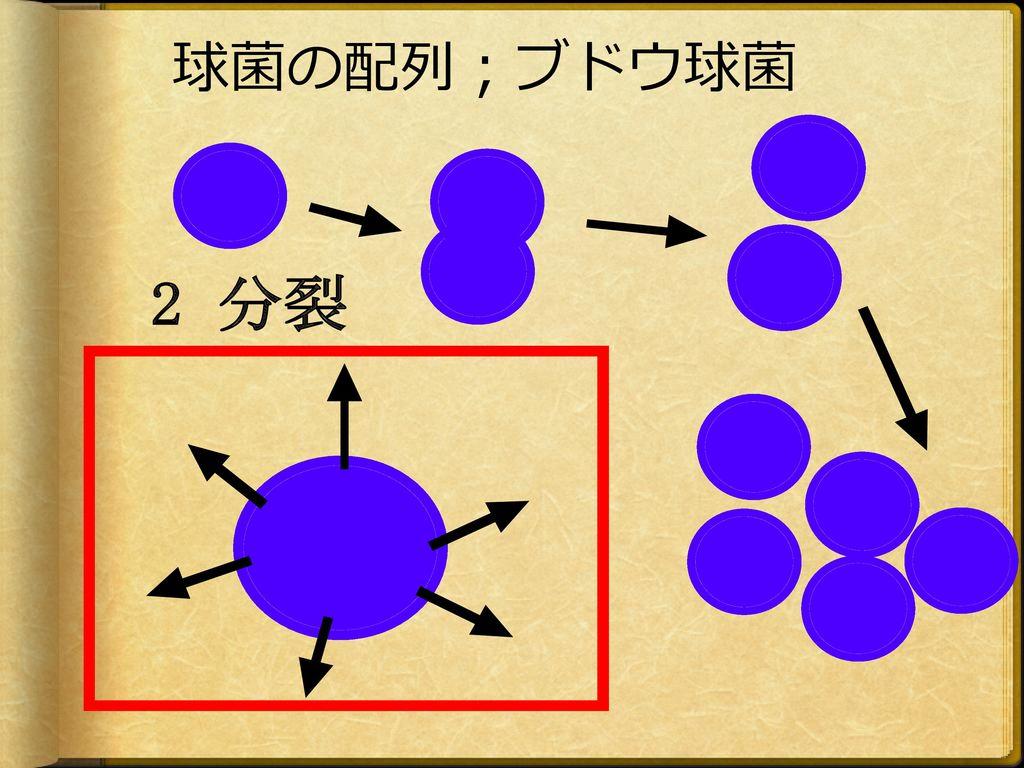 球菌の配列;ブドウ球菌