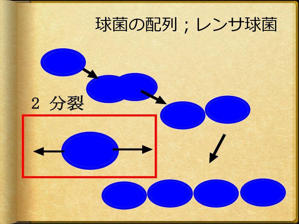 球菌の配列;レンサ球菌