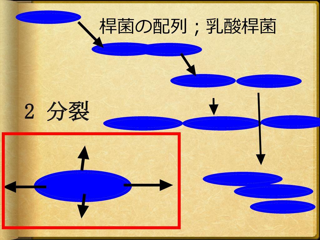 桿菌の配列;乳酸桿菌