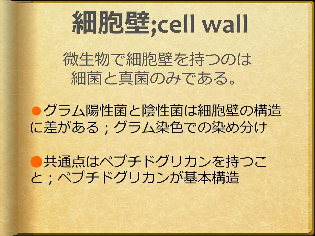 微生物で細胞壁を持つのは 細菌と真菌のみである。