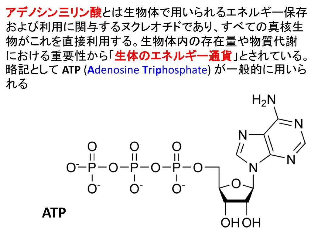 アデノシン三リン酸とは生物体で用いられるエネルギー保存および利用に関与するヌクレオチドであり、すべての真核生物がこれを直接利用する。生物体内の存在量や物質代謝における重要性から「生体のエネルギー通貨」とされている。略記として ATP (Adenosine Triphosphate) が一般的に用いられる