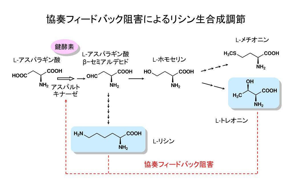 協奏フィードバック阻害によるリシン生合成調節