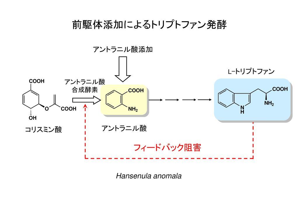 前駆体添加によるトリプトファン発酵 フィードバック阻害 アントラニル酸添加 アントラニル酸 コリスミン酸 Hansenula anomala