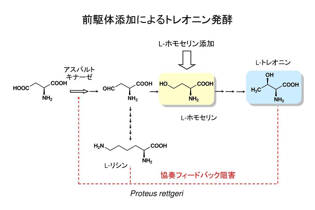 前駆体添加によるトレオニン発酵 協奏フィードバック阻害 Proteus rettgeri L-ホモセリン添加 アスパルト キナーゼ