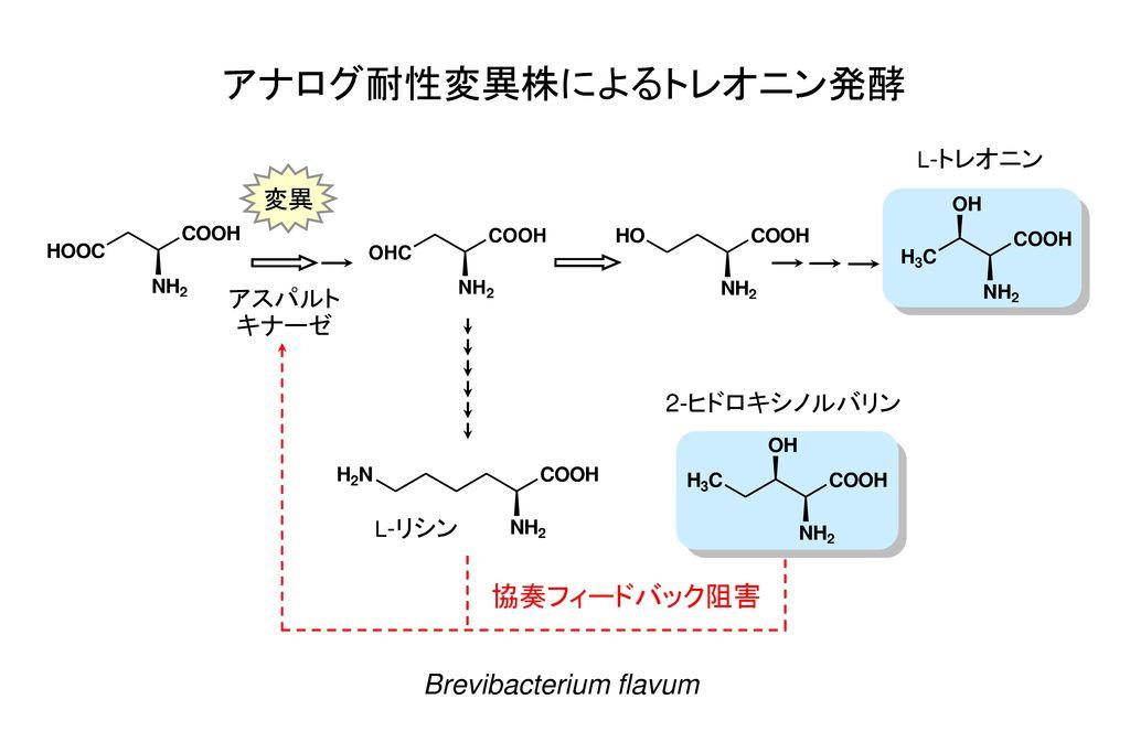 アナログ耐性変異株によるトレオニン発酵 協奏フィードバック阻害 Brevibacterium flavum 変異 アスパルト キナーゼ