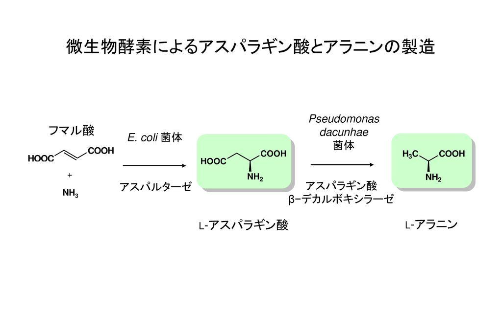 微生物酵素によるアスパラギン酸とアラニンの製造