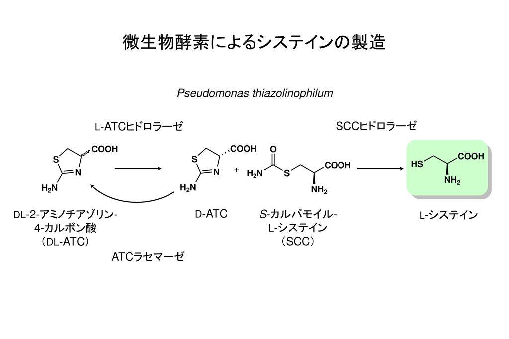 Pseudomonas thiazolinophilum