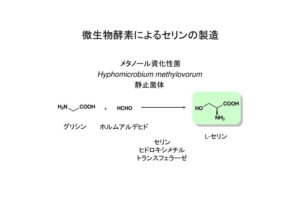 Hyphomicrobium methylovorum