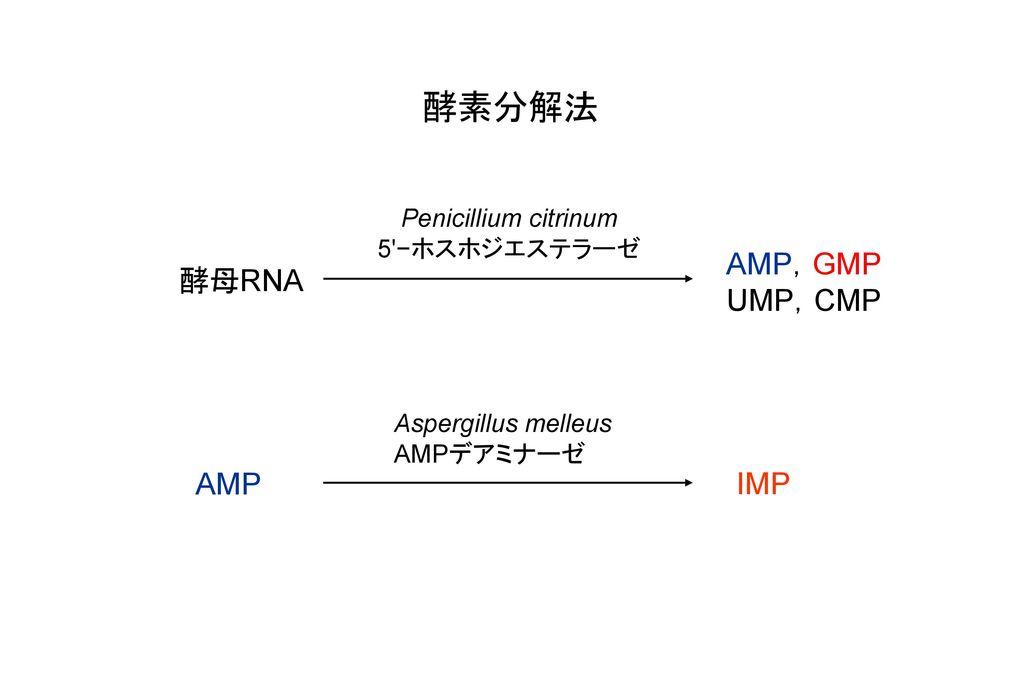 酵素分解法 AMP,GMP UMP,CMP 酵母RNA AMP IMP Penicillium citrinum 5 −ホスホジエステラーゼ