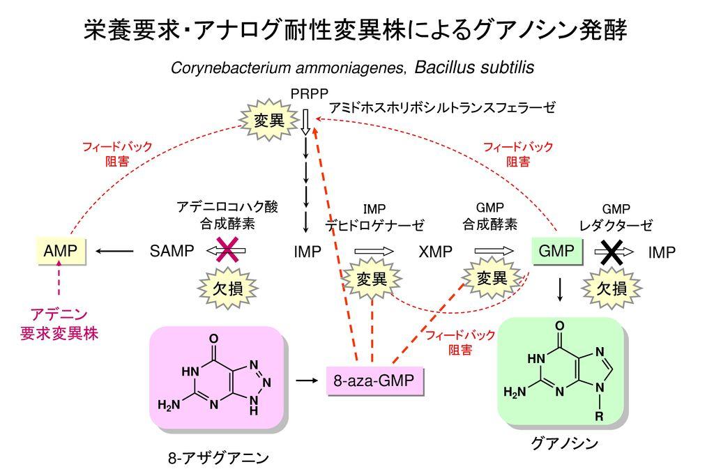 栄養要求・アナログ耐性変異株によるグアノシン発酵