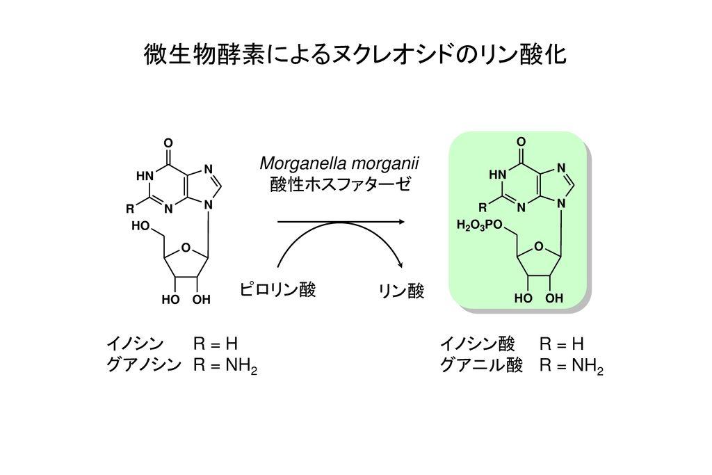 微生物酵素によるヌクレオシドのリン酸化 Morganella morganii 酸性ホスファターゼ ピロリン酸 リン酸 イノシン R = H