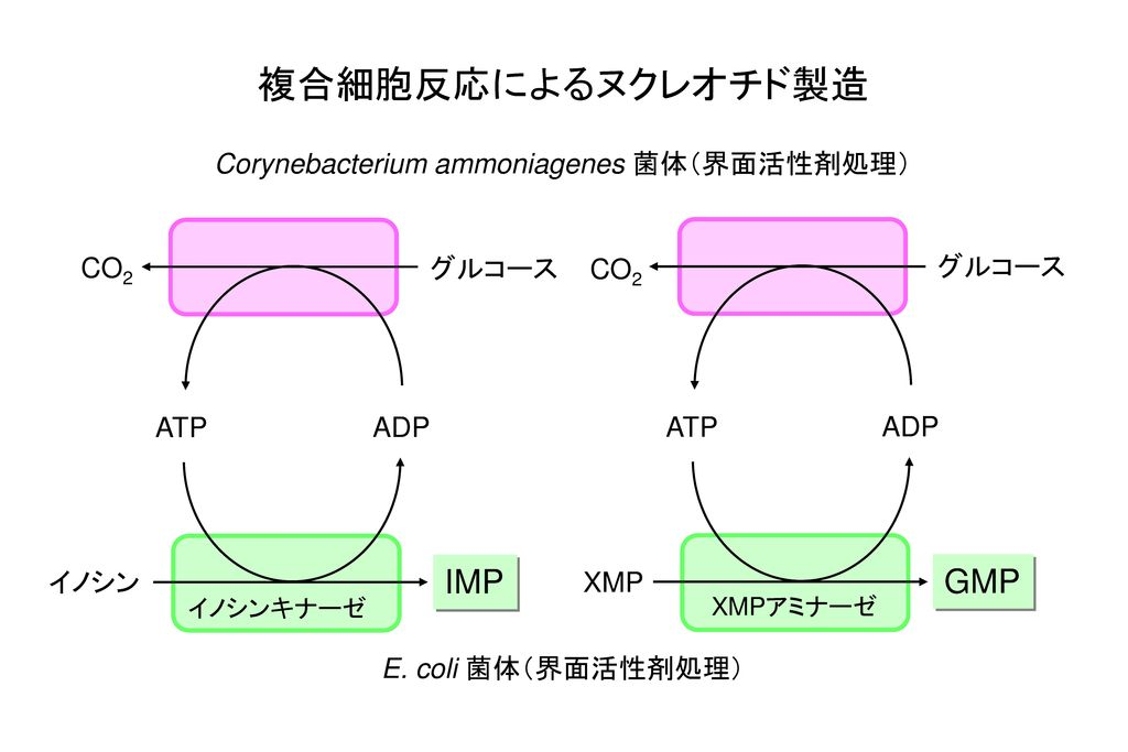 Corynebacterium ammoniagenes 菌体(界面活性剤処理)