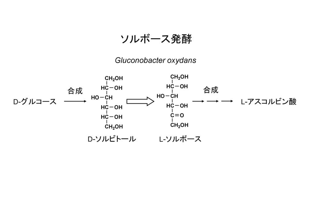 ソルボース発酵 Gluconobacter oxydans 合成 合成 D-グルコース L-アスコルビン酸 D-ソルビトール L-ソルボース