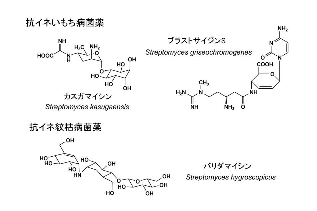 抗イネいもち病菌薬 抗イネ紋枯病菌薬 ブラストサイジンS カスガマイシン バリダマイシン