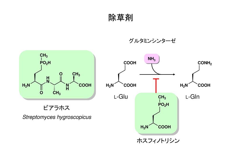 除草剤 ビアラホス ホスフィノトリシン グルタミンシンターゼ Streptomyces hygroscopicus L-Glu L-Gln