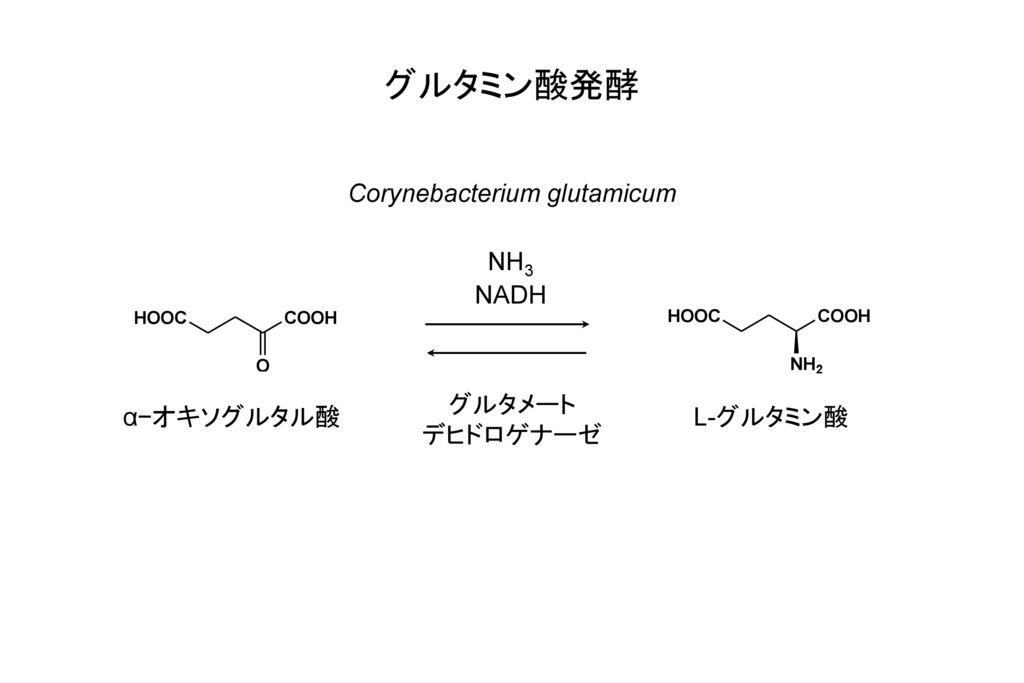 グルタミン酸発酵 Corynebacterium glutamicum NH3 NADH グルタメート デヒドロゲナーゼ