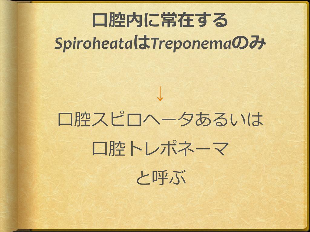 2012 口腔微生物学  11月6日 口腔微生物学講座;前田伸子.