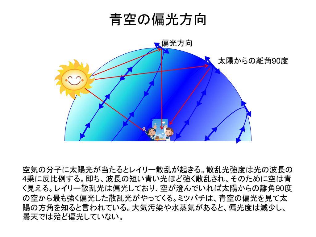 青空の偏光方向 偏光方向. 太陽からの離角90度.
